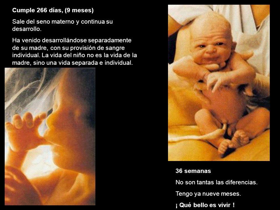 Cumple 266 días, (9 meses) Sale del seno materno y continua su desarrollo. Ha venido desarrollándose separadamente de su madre, con su provisión de sa
