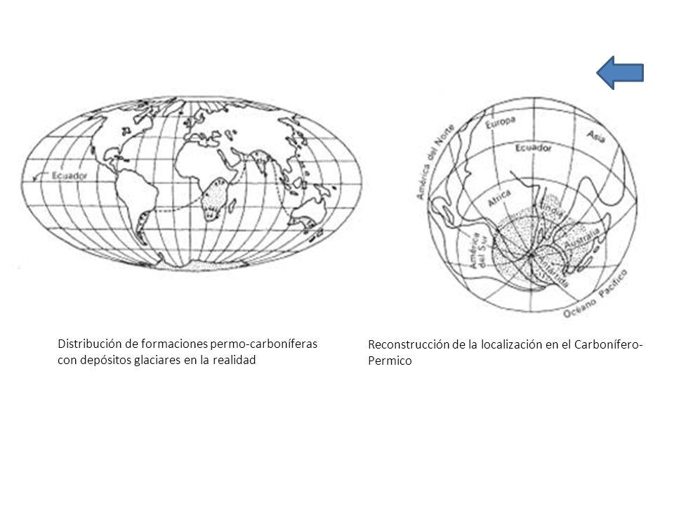Distribución de formaciones permo-carboníferas con depósitos glaciares en la realidad Reconstrucción de la localización en el Carbonífero- Permico