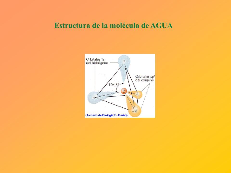Molécula de agua Una molécula de agua consiste en un átomo de oxígeno y dos átomos de hidrógeno unidos forman un ángulo de 105° al estar unidos cada á
