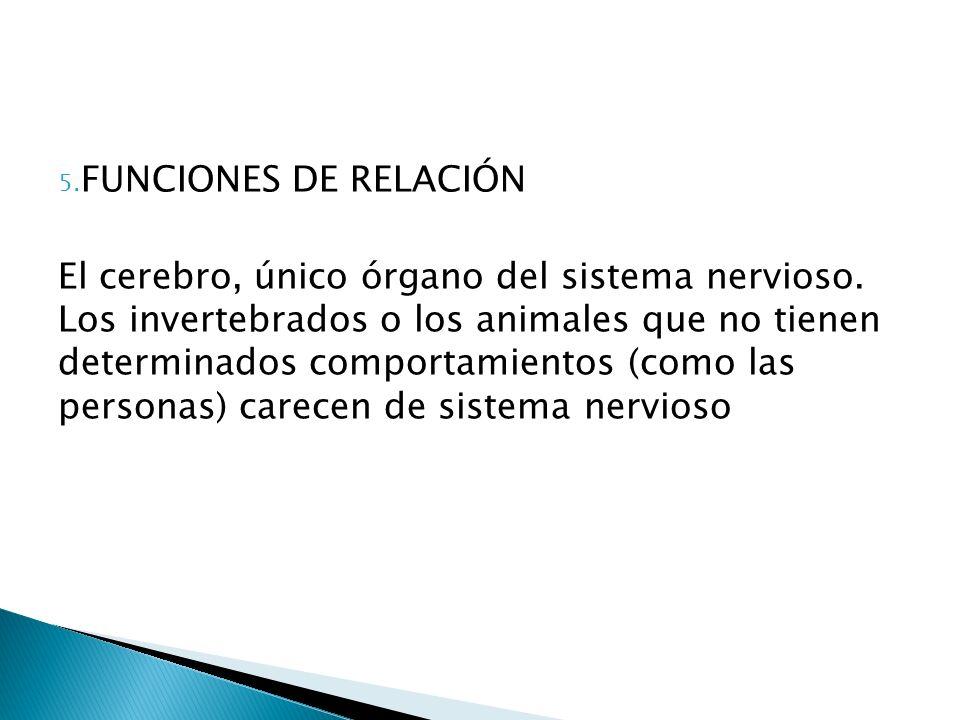 5. FUNCIONES DE RELACIÓN El cerebro, único órgano del sistema nervioso. Los invertebrados o los animales que no tienen determinados comportamientos (c