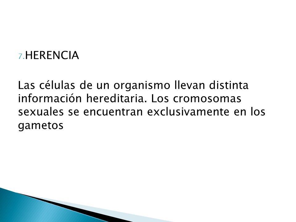 7. HERENCIA Las células de un organismo llevan distinta información hereditaria. Los cromosomas sexuales se encuentran exclusivamente en los gametos