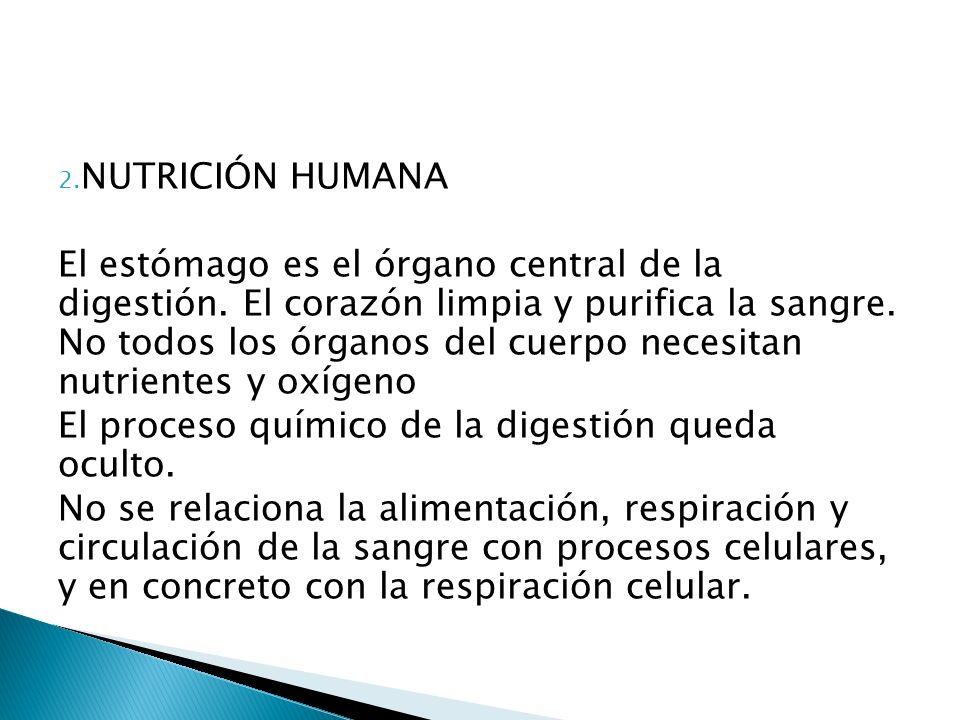 2. NUTRICIÓN HUMANA El estómago es el órgano central de la digestión. El corazón limpia y purifica la sangre. No todos los órganos del cuerpo necesita