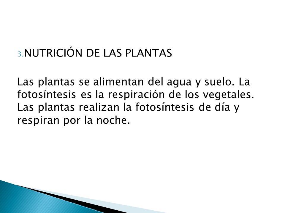 3. NUTRICIÓN DE LAS PLANTAS Las plantas se alimentan del agua y suelo. La fotosíntesis es la respiración de los vegetales. Las plantas realizan la fot