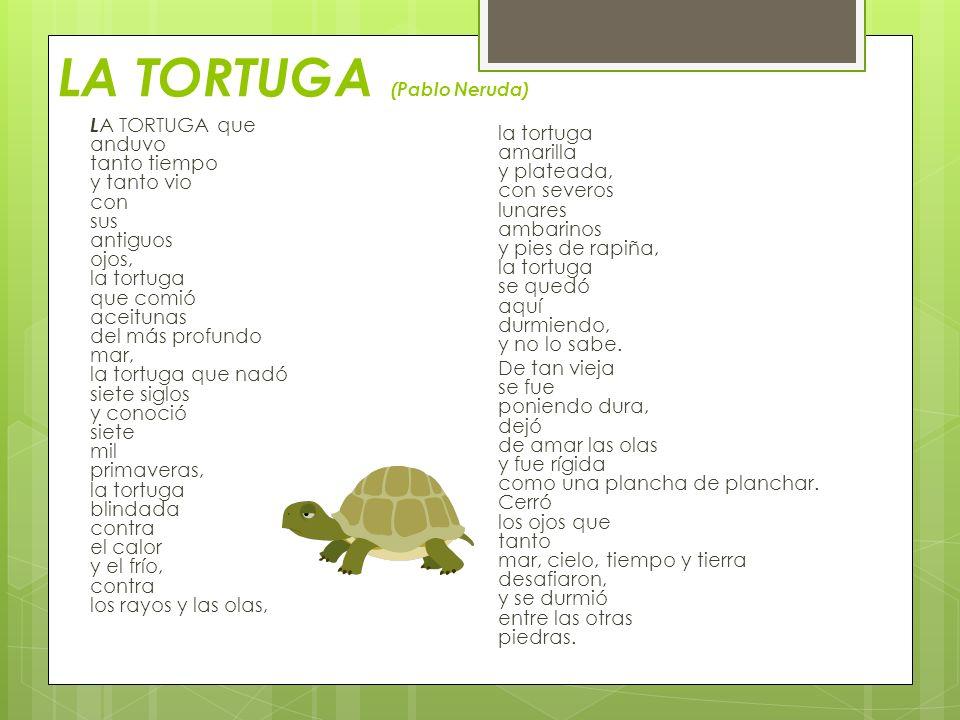 LA TORTUGA (Pablo Neruda) L A TORTUGA que anduvo tanto tiempo y tanto vio con sus antiguos ojos, la tortuga que comió aceitunas del más profundo mar,