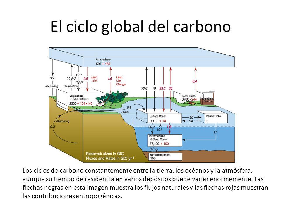 El ciclo global del carbono Los ciclos de carbono constantemente entre la tierra, los océanos y la atmósfera, aunque su tiempo de residencia en varios