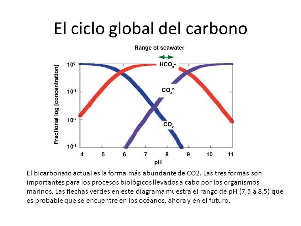 El ciclo global del carbono El bicarbonato actual es la forma más abundante de CO2. Las tres formas son importantes para los procesos biológicos lleva