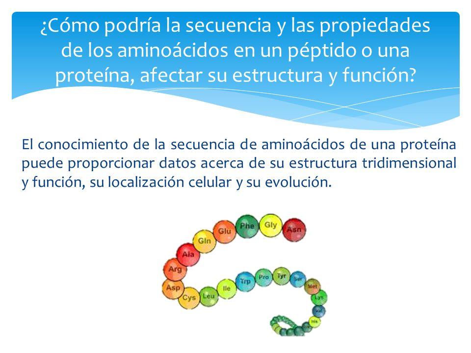 El conocimiento de la secuencia de aminoácidos de una proteína puede proporcionar datos acerca de su estructura tridimensional y función, su localizac