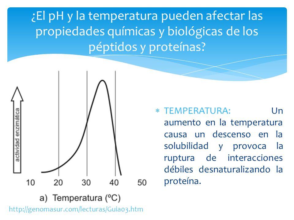 TEMPERATURA: Un aumento en la temperatura causa un descenso en la solubilidad y provoca la ruptura de interacciones débiles desnaturalizando la proteí