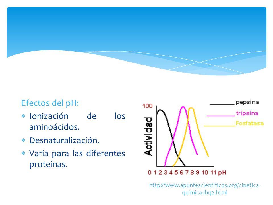 Efectos del pH: Ionización de los aminoácidos. Desnaturalización. Varia para las diferentes proteínas. http://www.apuntescientificos.org/cinetica- qui