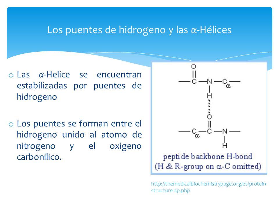 o Las α-Helice se encuentran estabilizadas por puentes de hidrogeno o Los puentes se forman entre el hidrogeno unido al atomo de nitrogeno y el oxigen