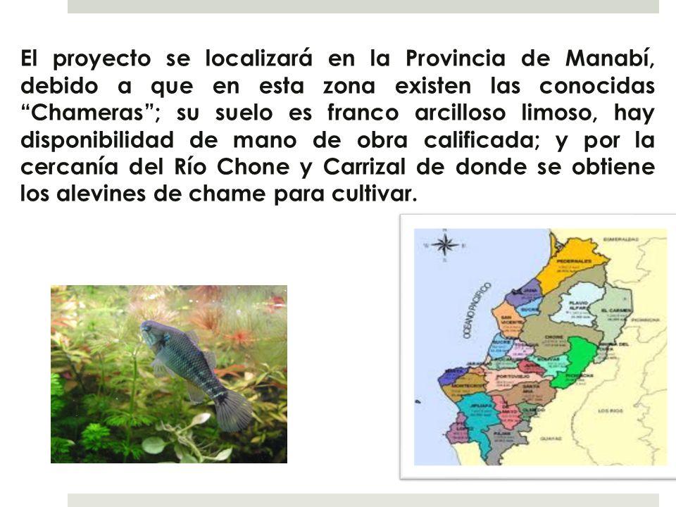 El proyecto se localizará en la Provincia de Manabí, debido a que en esta zona existen las conocidas Chameras; su suelo es franco arcilloso limoso, ha