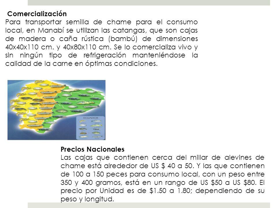 Comercialización Para transportar semilla de chame para el consumo local, en Manabí se utilizan las catangas, que son cajas de madera o caña rústica (