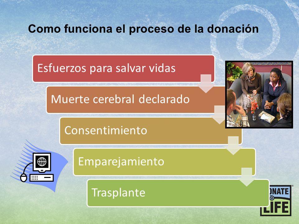 Esfuerzos para salvar vidasMuerte cerebral declaradoConsentimientoEmparejamientoTrasplante Como funciona el proceso de la donación