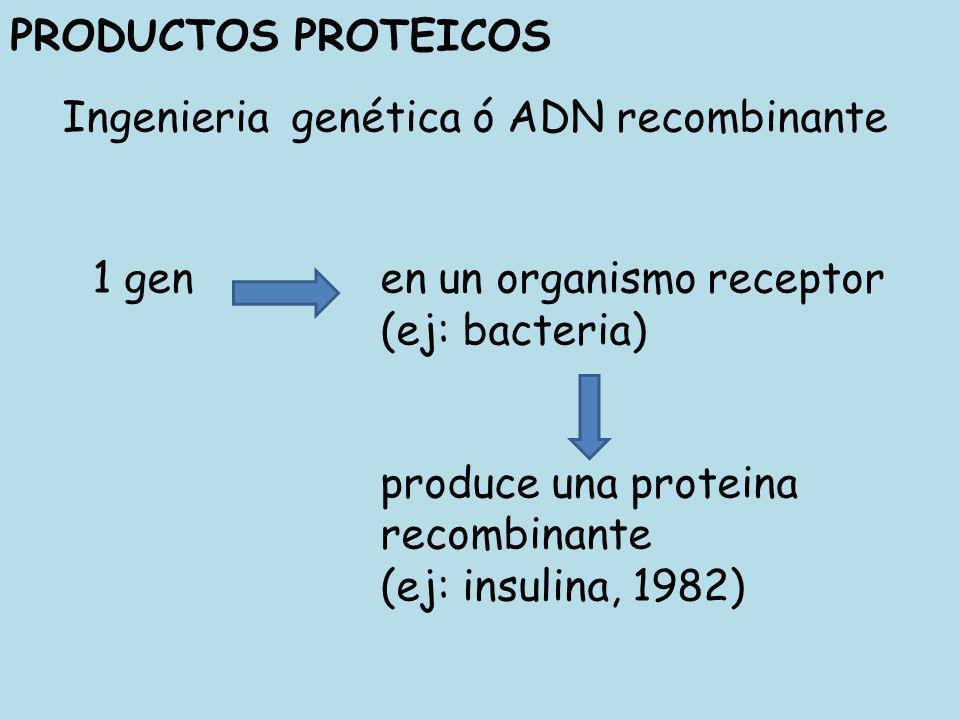 Ingenieria genética ó ADN recombinante PRODUCTOS PROTEICOS 1 gen en un organismo receptor (ej: bacteria) produce una proteina recombinante (ej: insuli