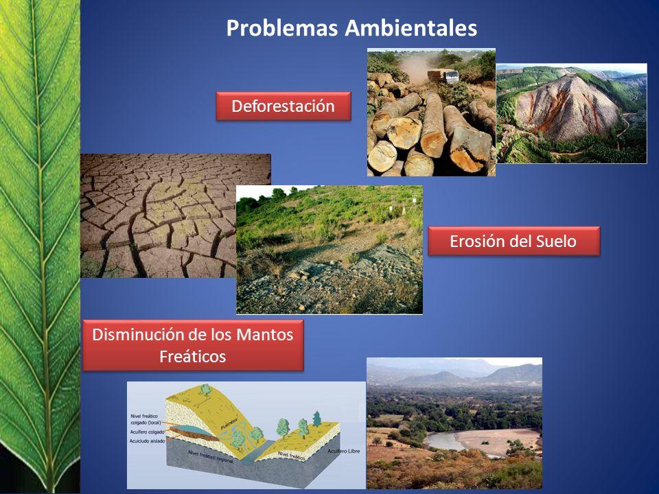 Problemas Ambientales Deforestación Erosión del Suelo Disminución de los Mantos Freáticos
