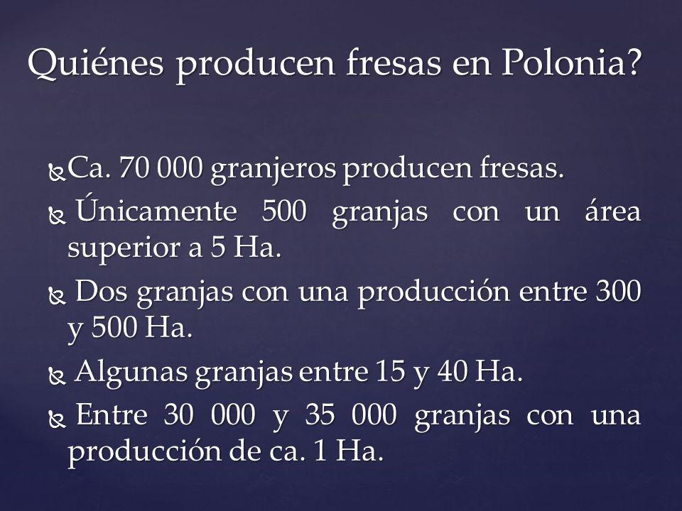 Ca. 70 000 granjeros producen fresas. Ca. 70 000 granjeros producen fresas. Únicamente 500 granjas con un área superior a 5 Ha. Únicamente 500 granjas