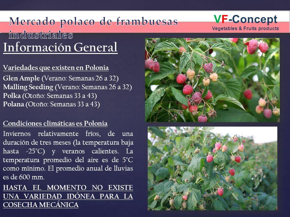 VF-Concept Vegetables & Fruits products Información General Variedades que existen en Polonia Glen Ample (Verano: Semanas 26 a 32) Malling Seeding (Ve