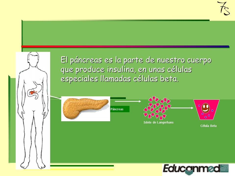 La glucosa es la fuente más importante de energía pero para que la glucosa entre en la célula y se transforme en energía requiere INSULINA