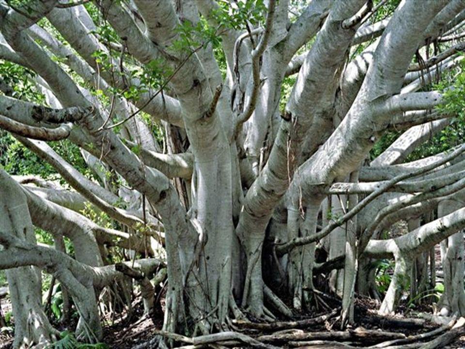 Quizás es porque usted permite que tan solo un árbol tape el bosque de oportunidades…