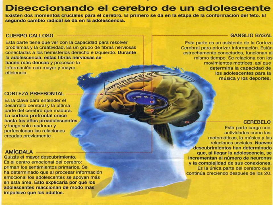 HABLE CON SUS HIJOS ACERCA DE: Los efectos inmediatos del uso de alcohol, tabaco y otras drogas.