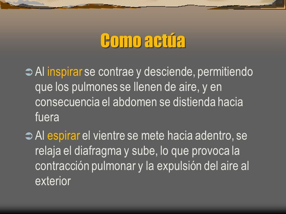 Como actúa Al inspirar se contrae y desciende, permitiendo que los pulmones se llenen de aire, y en consecuencia el abdomen se distienda hacia fuera Al espirar el vientre se mete hacia adentro, se relaja el diafragma y sube, lo que provoca la contracción pulmonar y la expulsión del aire al exterior