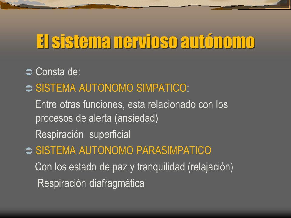 El sistema nervioso autónomo Consta de: SISTEMA AUTONOMO SIMPATICO: Entre otras funciones, esta relacionado con los procesos de alerta (ansiedad) Respiración superficial SISTEMA AUTONOMO PARASIMPATICO Con los estado de paz y tranquilidad (relajación) Respiración diafragmática