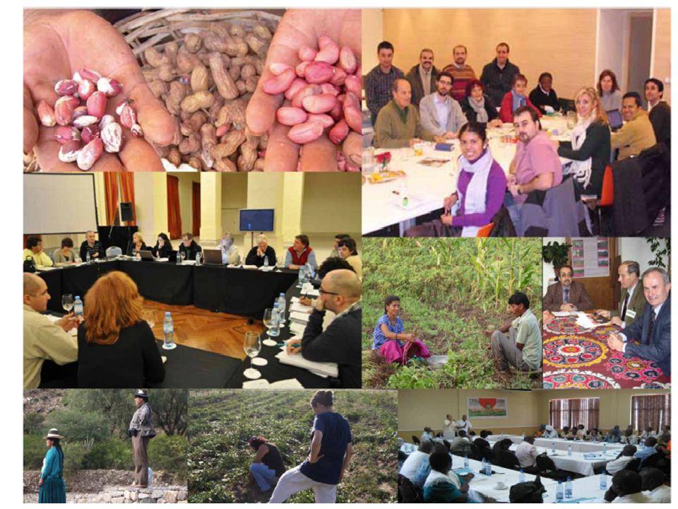 -> En Mayo 2011, El Comité Consultivo Mundial-CCM de la Campaña completó su composición: AMÉRICA: Alessandra Lunas (COPROFAM), Rubén Tapia (RELACC ) AFRICA: Elizabeth Atangana (PROPAC-PAFO), Francis Ngang (Inades Formation) ASIA: Reema Nanavaty-SEWA-India), Marlene Ramirez (AsiaDHRRA) EUROPA: Ramos (UPA, COPA-COGECA), Laure Hamdi (AFDI) (LA REGION PACÍFICO-OCEANÍA SE INCORPORA EN 2012) El FRM actúa como Secretaría del CCM.