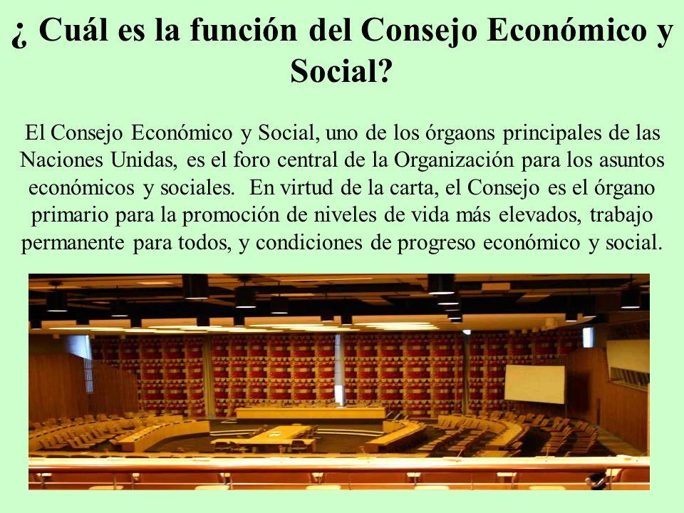 ¿ Cuál es la función del Consejo Económico y Social? El Consejo Económico y Social, uno de los órgaons principales de las Naciones Unidas, es el foro