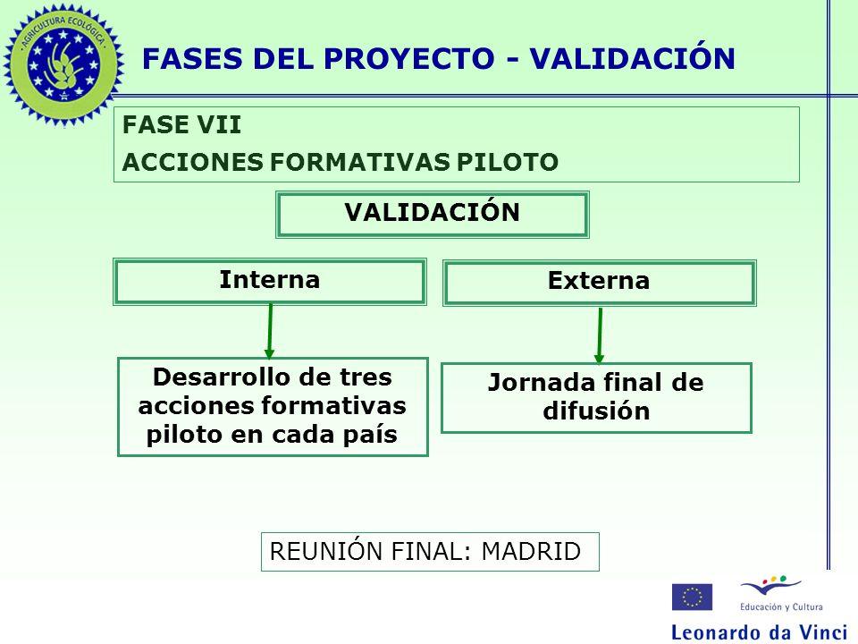 FASES DEL PROYECTO - VALIDACIÓN FASE VII ACCIONES FORMATIVAS PILOTO Desarrollo de tres acciones formativas piloto en cada país VALIDACIÓN Interna Exte