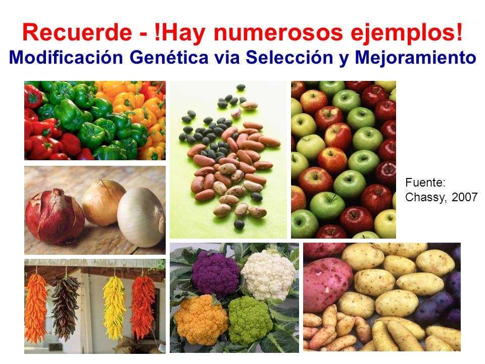 Recuerde - !Hay numerosos ejemplos! Modificación Genética via Selección y Mejoramiento Fuente: Chassy, 2007