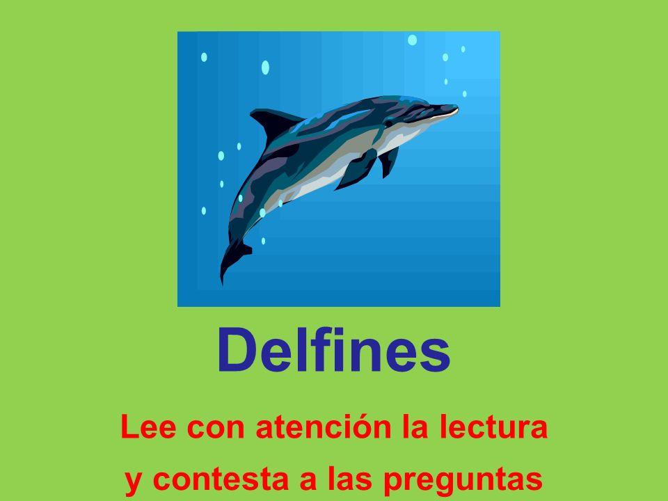 Delfines Lee con atención la lectura y contesta a las preguntas