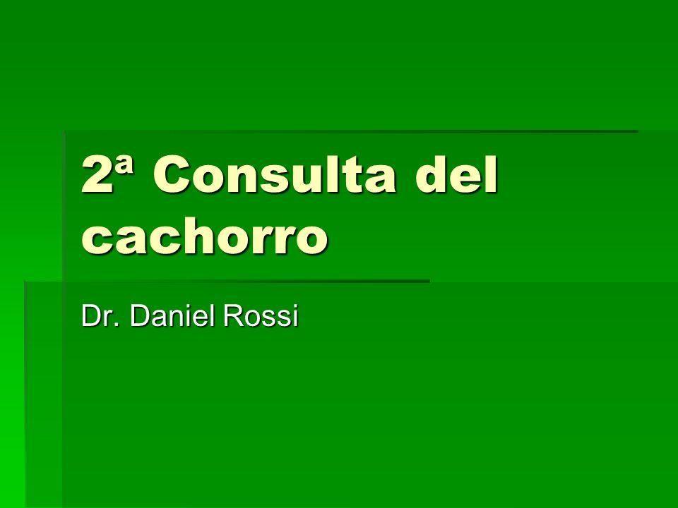 2ª Consulta del cachorro Dr. Daniel Rossi