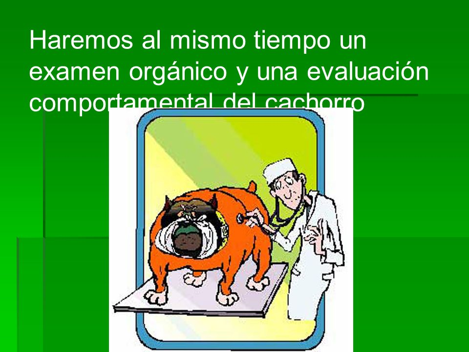 Haremos al mismo tiempo un examen orgánico y una evaluación comportamental del cachorro