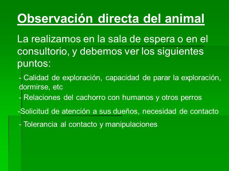 Observación directa del animal La realizamos en la sala de espera o en el consultorio, y debemos ver los siguientes puntos: - Calidad de exploración,