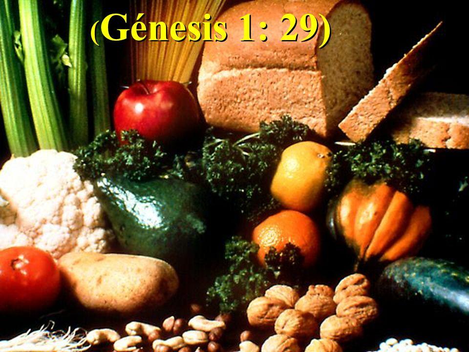 ( Génesis 1: 29)