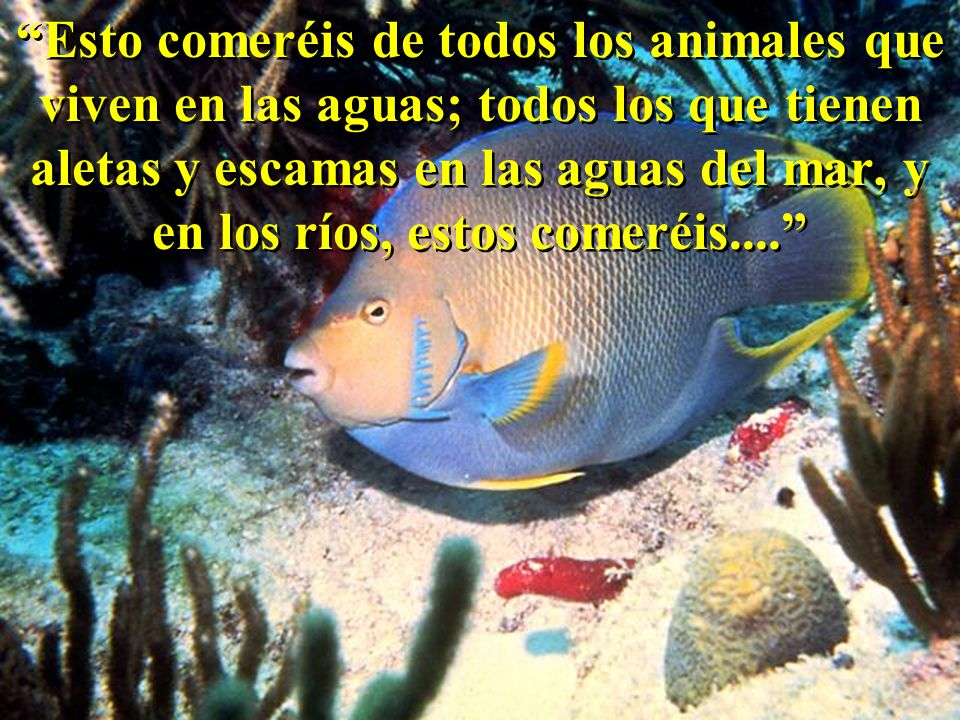 Esto comeréis de todos los animales que viven en las aguas; todos los que tienen aletas y escamas en las aguas del mar, y en los ríos, estos comeréis....
