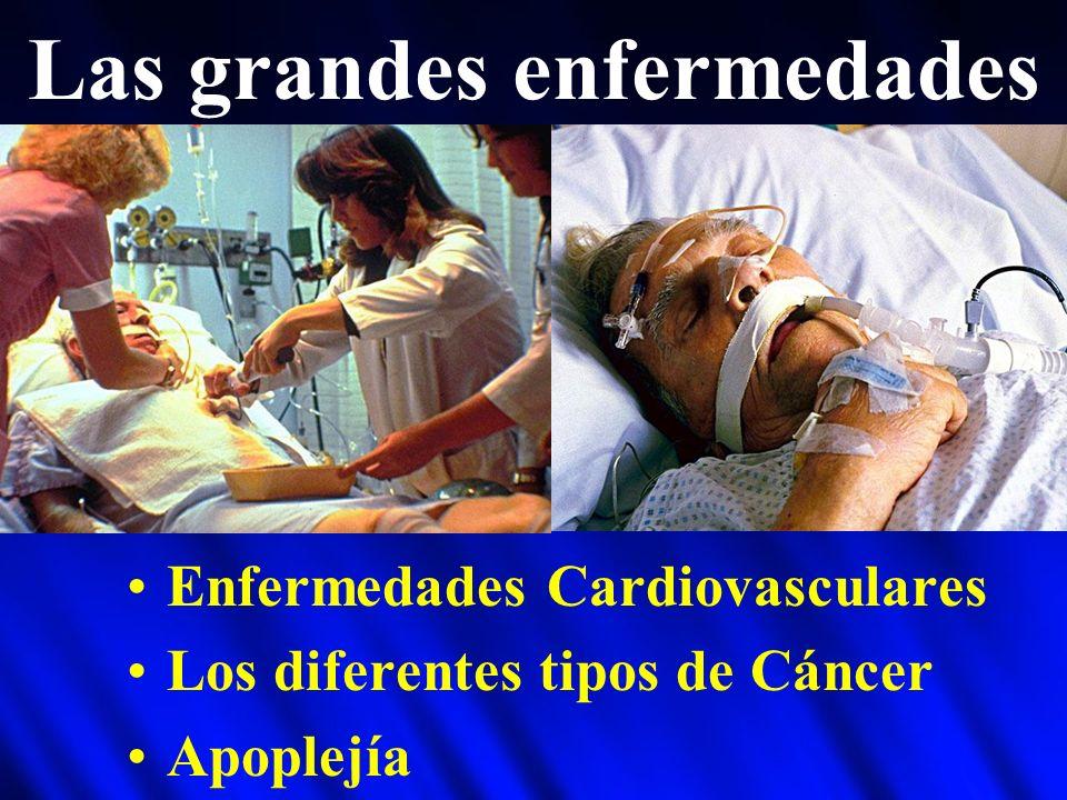 Las grandes enfermedades Enfermedades Cardiovasculares Los diferentes tipos de Cáncer Apoplejía