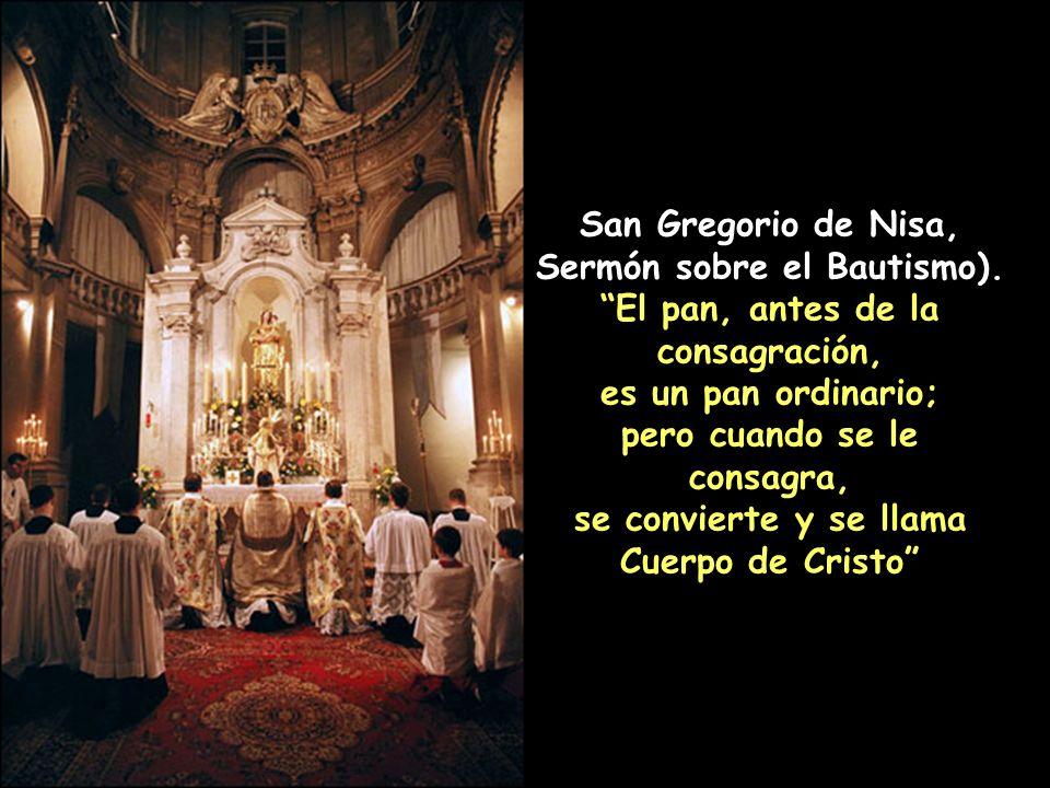 San Cirilo de Alejandría, Coment. sobre S. Mateo. Y dijo en modo demostrativo: Este es mi Cuerpo y esta es mi Sangre, para que no pienses que las cosa