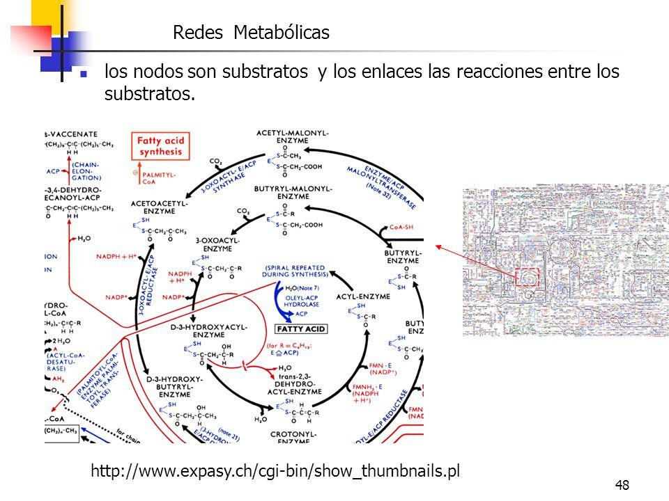 48 http://www.expasy.ch/cgi-bin/show_thumbnails.pl Redes Metabólicas los nodos son substratos y los enlaces las reacciones entre los substratos.