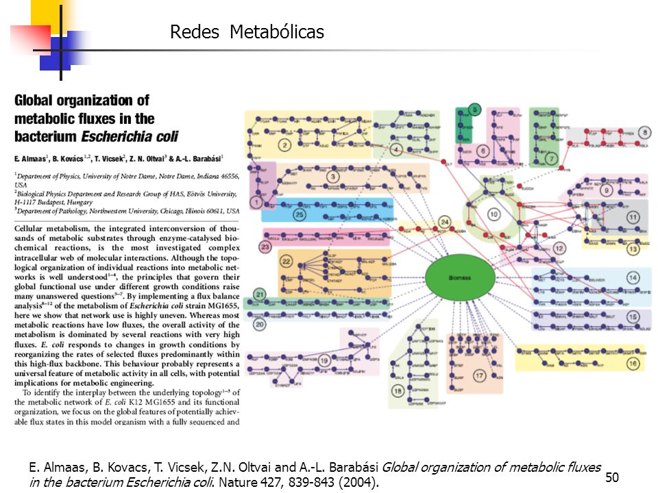 50 Redes Metabólicas E. Almaas, B. Kovacs, T. Vicsek, Z.N. Oltvai and A.-L. Barabási Global organization of metabolic fluxes in the bacterium Escheric