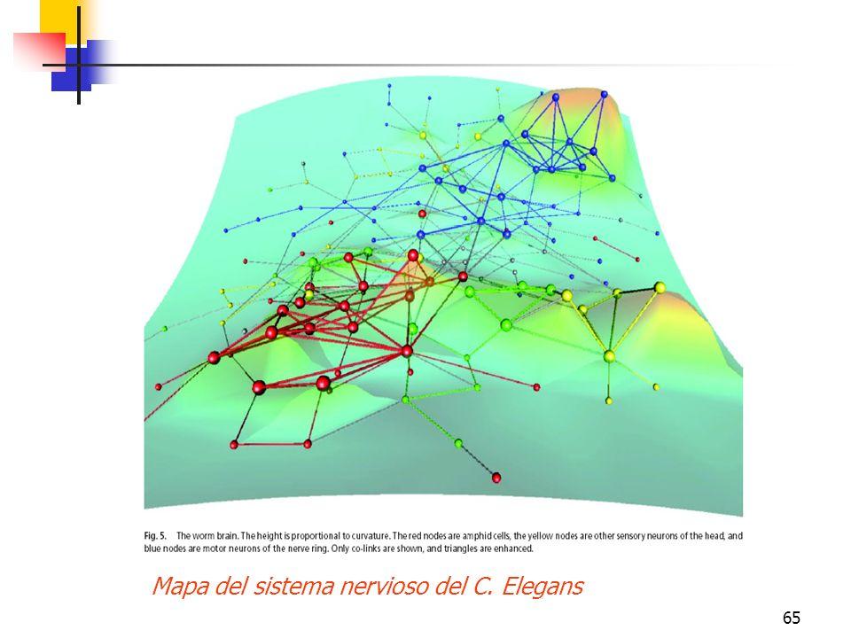 65 Mapa del sistema nervioso del C. Elegans