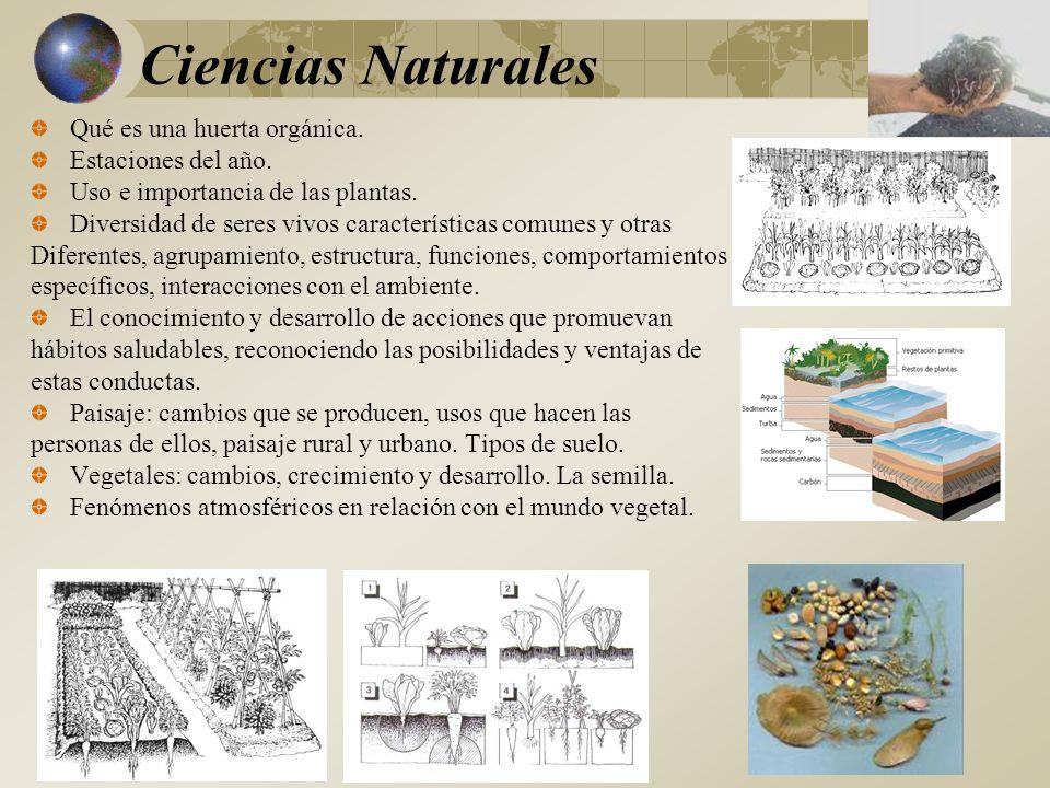 Qué es una huerta orgánica.Estaciones del año. Uso e importancia de las plantas.