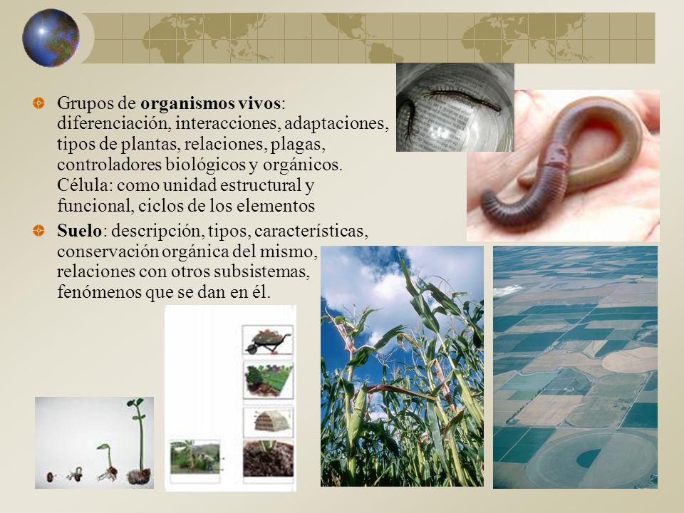 Grupos de organismos vivos: diferenciación, interacciones, adaptaciones, tipos de plantas, relaciones, plagas, controladores biológicos y orgánicos.
