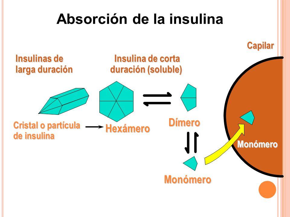 CapilarMonómero Dímero Hexámero Cristal o partícula de insulina Insulinas de larga duración Insulina de corta duración (soluble) Monómero Absorción de la insulina