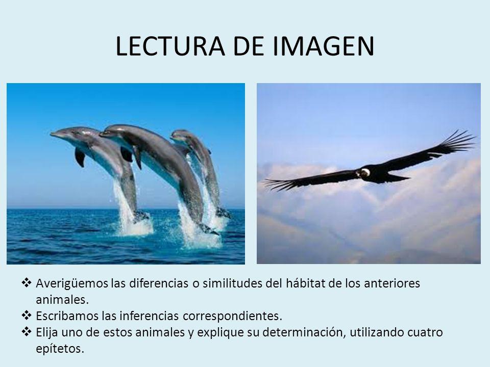 LECTURA DE IMAGEN Averigüemos las diferencias o similitudes del hábitat de los anteriores animales. Escribamos las inferencias correspondientes. Elija