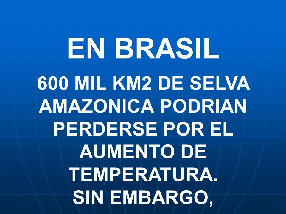 EN BRASIL 600 MIL KM2 DE SELVA AMAZONICA PODRIAN PERDERSE POR EL AUMENTO DE TEMPERATURA. SIN EMBARGO,