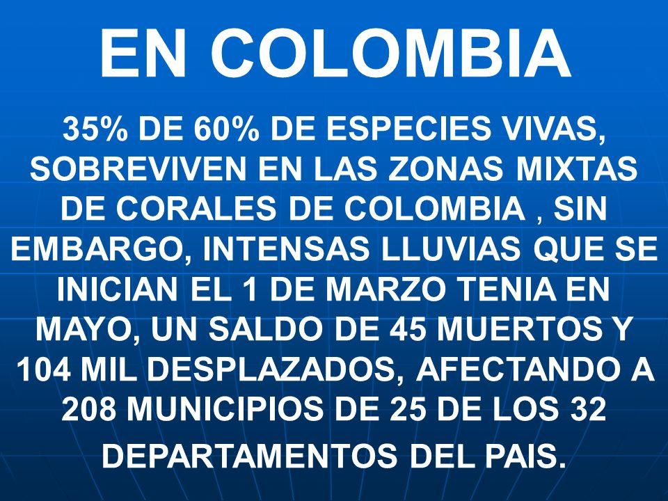 EN COLOMBIA 35% DE 60% DE ESPECIES VIVAS, SOBREVIVEN EN LAS ZONAS MIXTAS DE CORALES DE COLOMBIA, SIN EMBARGO, INTENSAS LLUVIAS QUE SE INICIAN EL 1 DE
