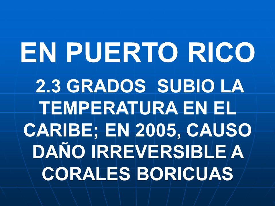 EN PUERTO RICO 2.3 GRADOS SUBIO LA TEMPERATURA EN EL CARIBE; EN 2005, CAUSO DAÑO IRREVERSIBLE A CORALES BORICUAS