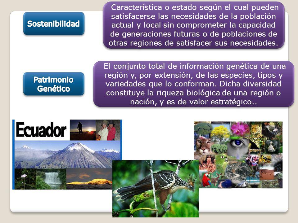 El conjunto total de información genética de una región y, por extensión, de las especies, tipos y variedades que lo conforman. Dicha diversidad const