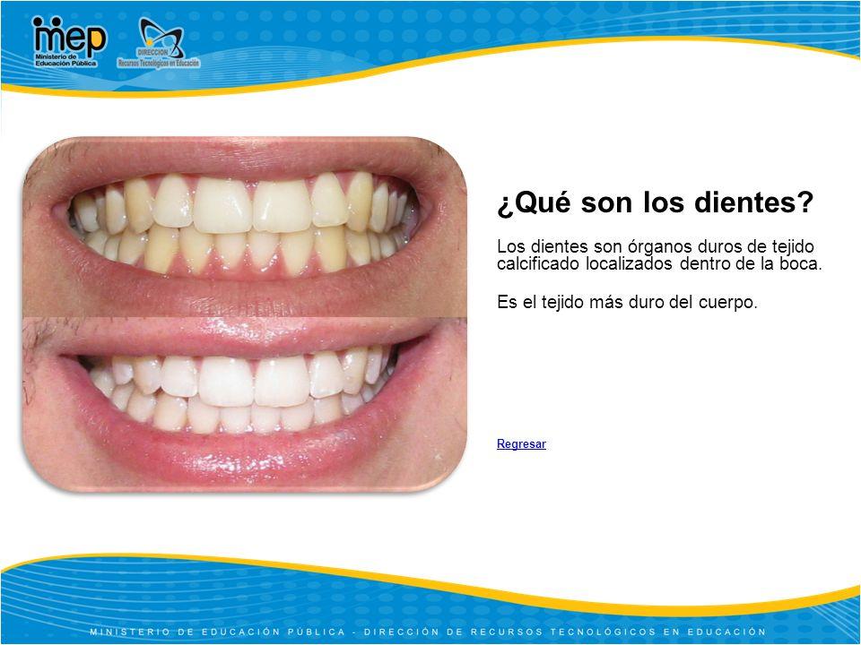 ¿Qué son los dientes.